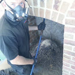 Chimney Sweeping - Removing a Jackdaw Nest